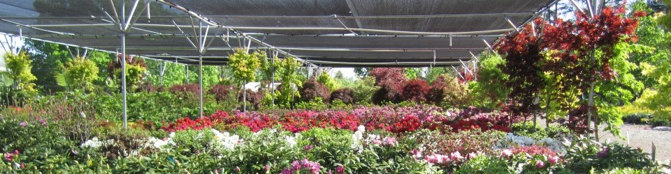 The Farm And Garden Station Beautifying Backyards One At A Time